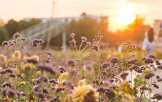 Das Landesgartenschaugelände ist malerische Kulisse für 18 Abende Festivalatmosphäre.